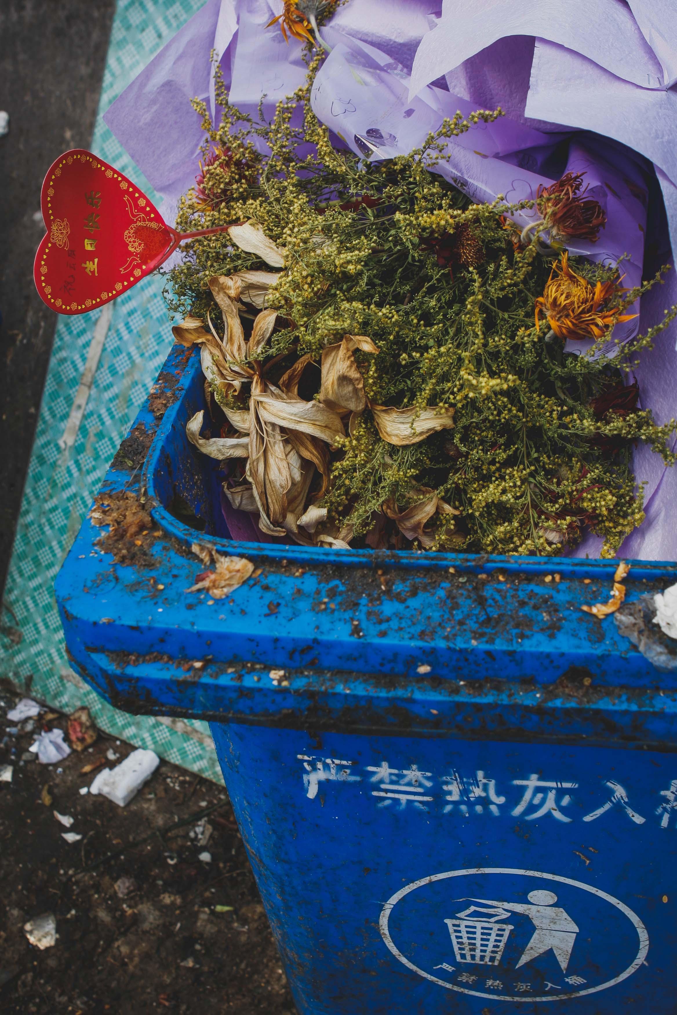 077-Xina_Blog